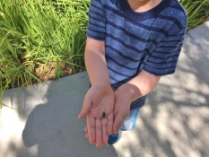 A Boy and a Bug at Flo Jo Park Mission Viejo
