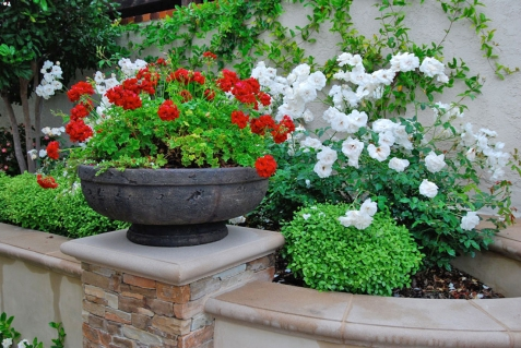 Container Garden in Mission Viejo Courtyard