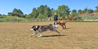 Off Leash at La Paws Dog Park Mission Viejo