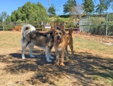Dogs at the La Paws Dog Park in Mission Viejo