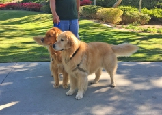 Dogs Walking at Florence Joyner Park in Mission Viejo