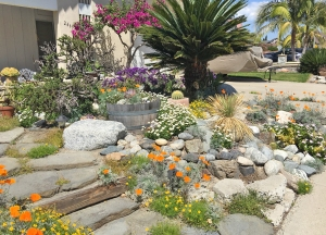 Water-wise Garden at Aegean Hills Home Mission Viejo