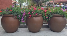 Mission Viejo Business Landscaping Flower Pots
