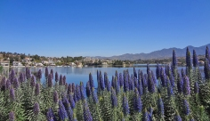 Lake Mission Viejo and Saddleback | Pride of Madeira in Foreground