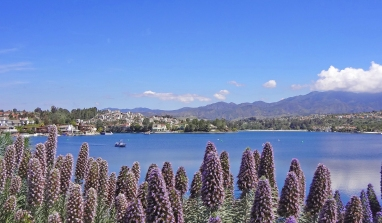 Lake Mission Viejo and Pride of Madeira Flowers