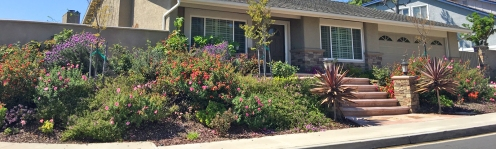 Mission Viejo Home Slope Landscaping