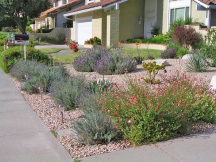 Waterwise Landscaping in Madrid Home Yard Mission Viejo