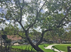 Marguerite M. O'Neill Park in Central Mission Viejo Near the Deane Homes