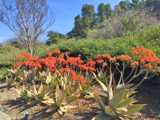 Oso Creek Trail and Jeronimo Open Space, Mission Viejo