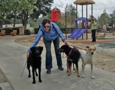 Rescue Dogs and Owner at Oso Viejo Park