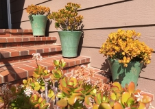 Jade Plants in Colorful Pots on Steps of Mission Viejo Home
