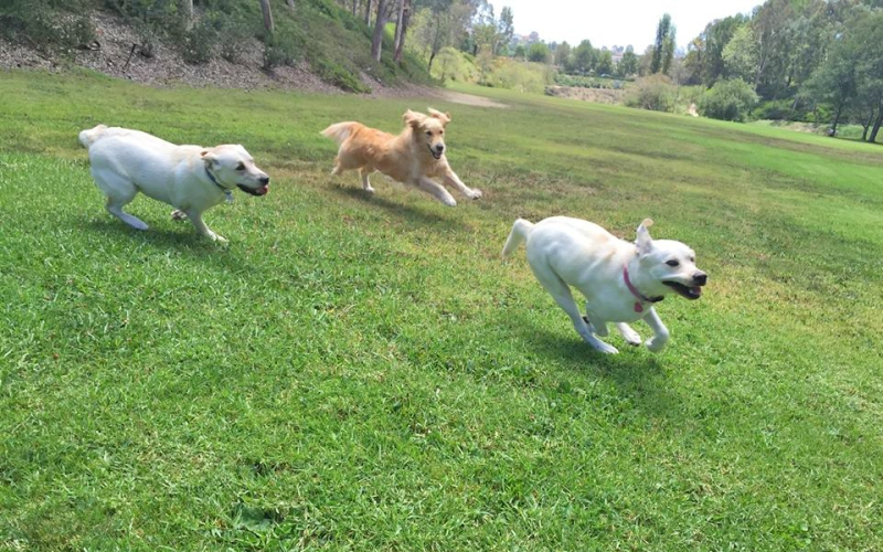 Dogs at La Paws Dog Park Mission Viejo