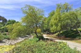 Spring Time Oso Creek Trail in Mission Viejo