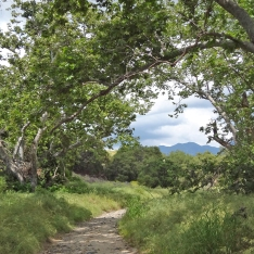 Sycamores and Saddleback Along Trabuco Creek Trail
