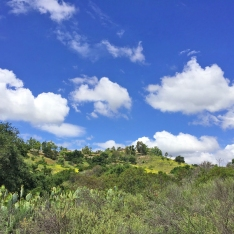 Arroyo Trabuco Hillside and Mustard Flowers